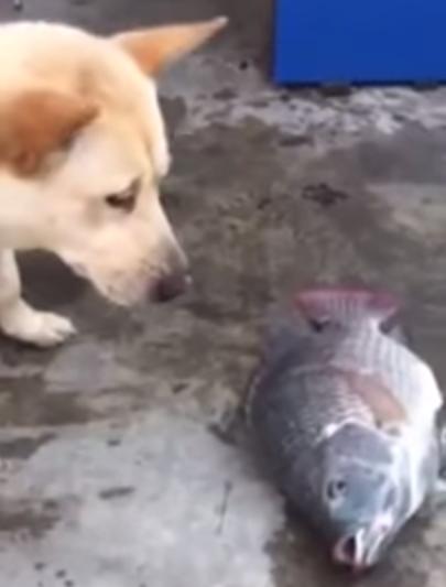 Perro_peces