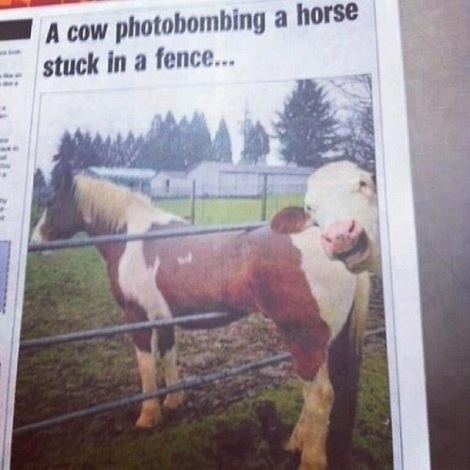 animal-photobombs-10
