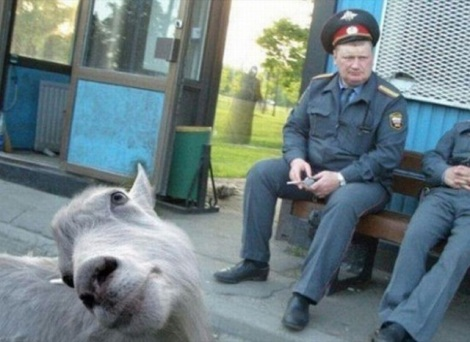 animal-photobombs-24