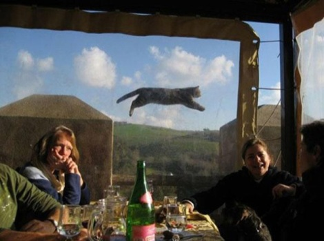 animal-photobombs-35