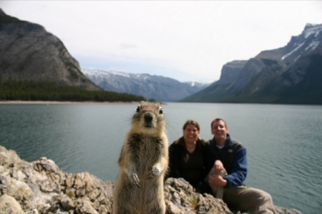 animal-photobombs-bonus-1