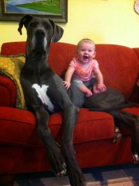 perros enormes 17