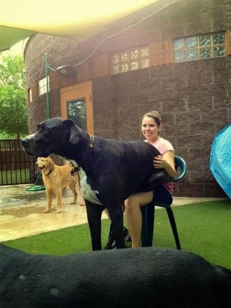perros enormes 7