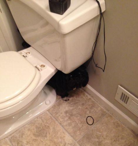 hiding-ninja-funny-dogs-111__605