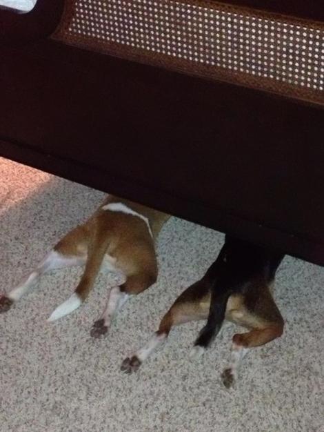 hiding-ninja-funny-dogs-181__605