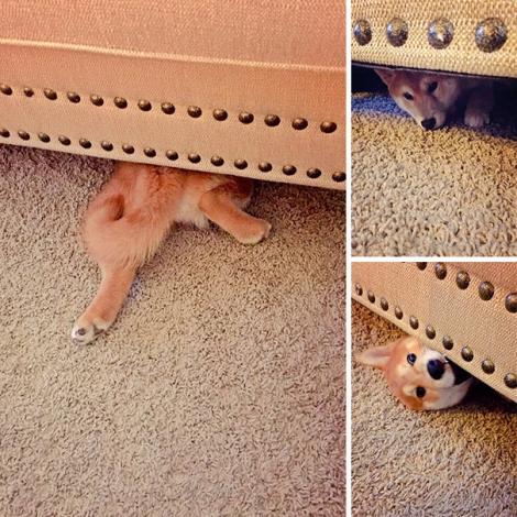 hiding-ninja-funny-dogs-241__605