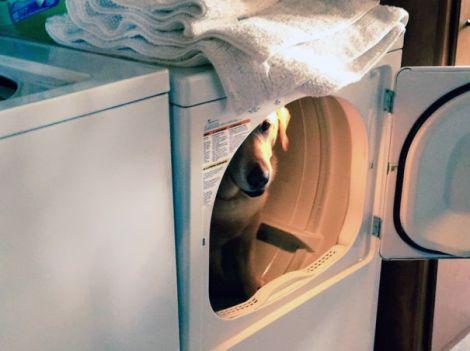 hiding-ninja-funny-dogs-251__605