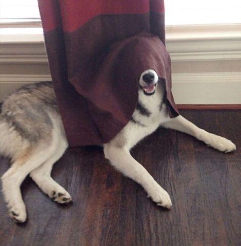 hiding-ninja-funny-dogs-29__605
