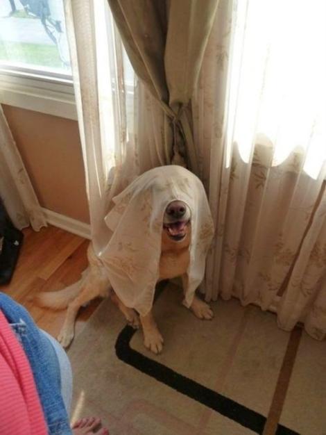 hiding-ninja-funny-dogs-31__605