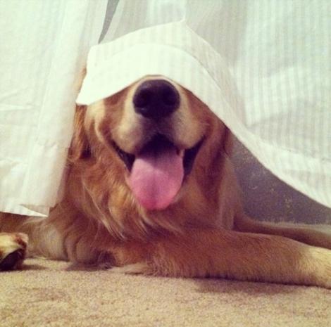 hiding-ninja-funny-dogs-81__605