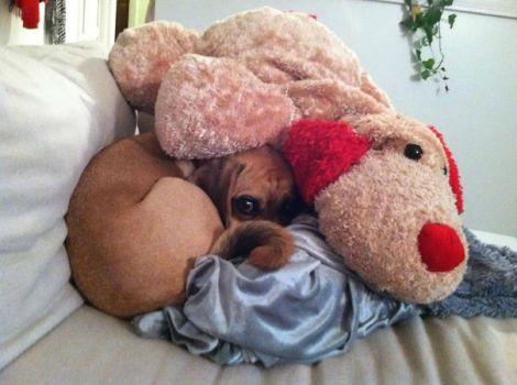 hiding-ninja-funny-dogs-91__605