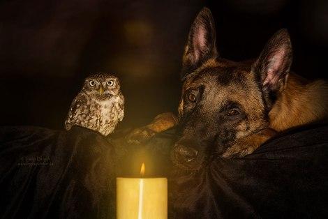 ingo-else-dog-owl-friendship-tanja-brandt-1