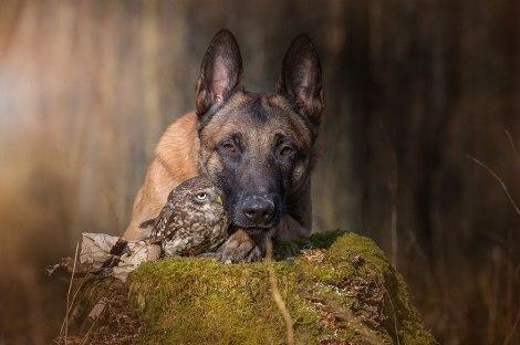 ingo-else-dog-owl-friendship-tanja-brandt-2
