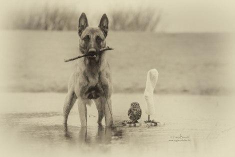 ingo-else-dog-owl-friendship-tanja-brandt-3